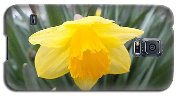 Spring Daffodil Galaxy S5 Case
