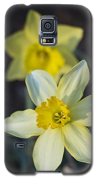 Spring Daffodils Galaxy S5 Case