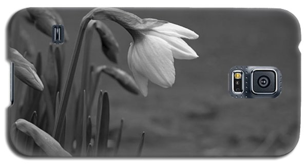 Spring Daffodils Galaxy S5 Case by Ron Roberts
