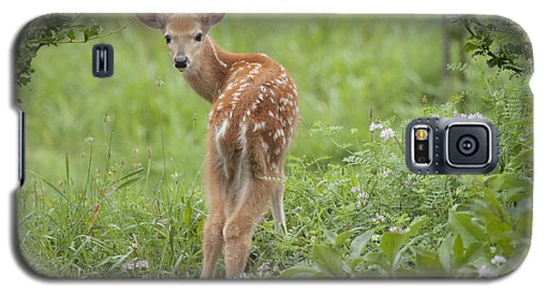 Spring Fawn Galaxy S5 Case by Jeannette Hunt