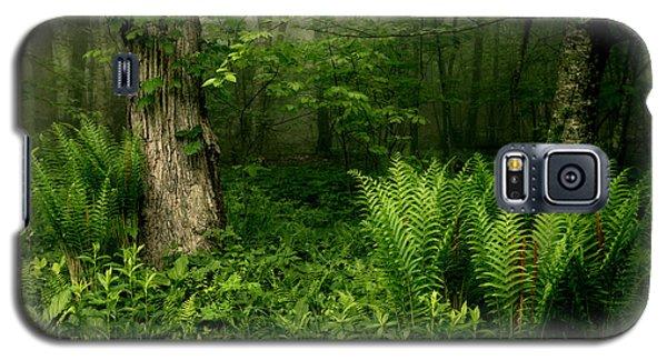 Spring Ferns Of The Blue Ridge 1 Galaxy S5 Case