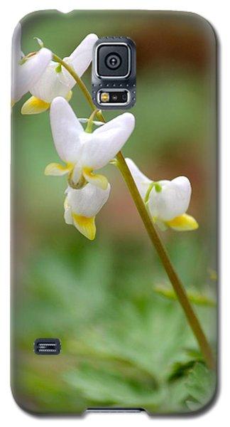 Spring Flower Galaxy S5 Case by Tiffany Erdman