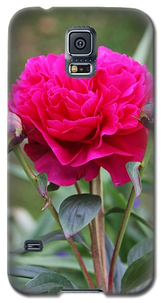 Galaxy S5 Case featuring the photograph Spring Flowers by Vadim Levin