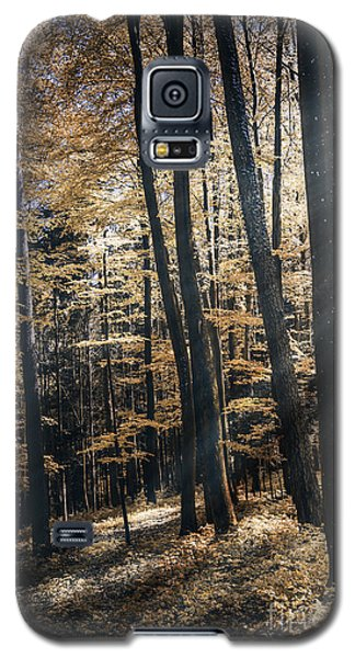 Galaxy S5 Case featuring the photograph Spring Forest by Bruno Santoro