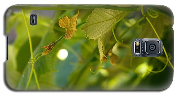 Galaxy S5 Case featuring the photograph Spring Green Grape Vines by Adria Trail