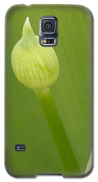 Galaxy S5 Case featuring the photograph Spring Green by Inge Riis McDonald