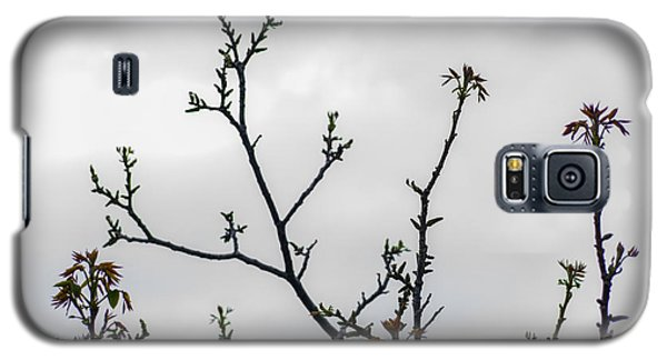 Spring Growth Galaxy S5 Case