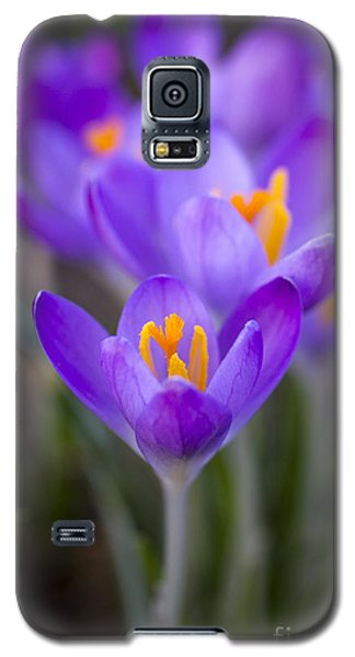 Spring Has Sprung Galaxy S5 Case by Clare Bambers