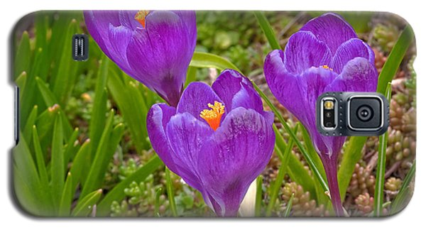 Galaxy S5 Case featuring the photograph Spring Has Sprung Crocus Flowers by Valerie Garner