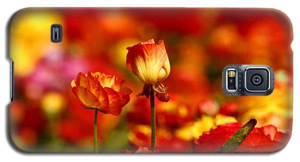 Carlsbad Spring Galaxy S5 Case