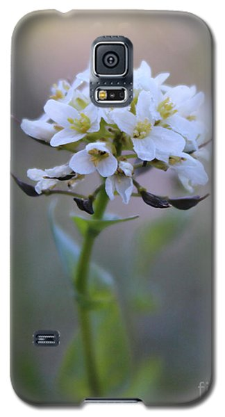 Spring In The Cimarrons Galaxy S5 Case