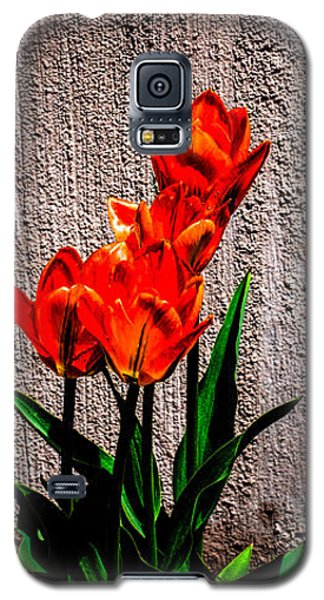 Spring In The City Galaxy S5 Case