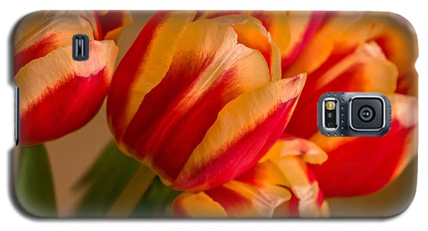 Spring Indoors Galaxy S5 Case