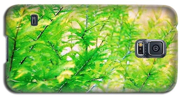 Spring Cypress Beauty Galaxy S5 Case