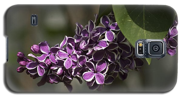 Galaxy S5 Case featuring the photograph Spring Lilac by Elsa Marie Santoro