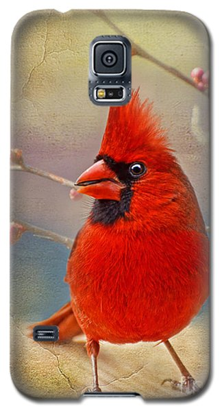 Spring Male Norther Cardinal Galaxy S5 Case