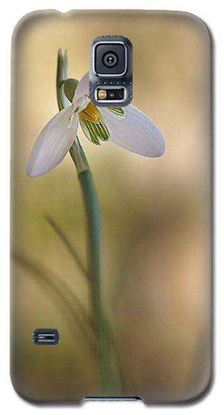 Galaxy S5 Case featuring the photograph Spring Messenger by Annie Snel