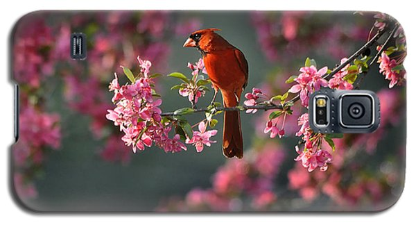 Spring Morning Cardinal Galaxy S5 Case by Nava Thompson