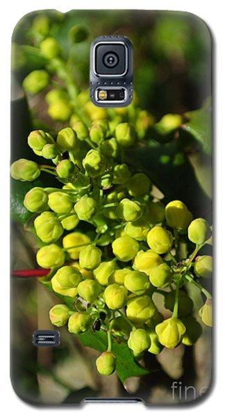 Spring Oregon Grape Galaxy S5 Case