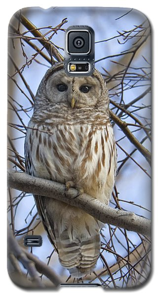 Spring Owl Galaxy S5 Case by Timothy McIntyre