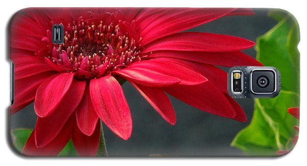 Spring Red Galaxy S5 Case
