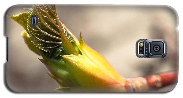 Spring Renewal Galaxy S5 Case