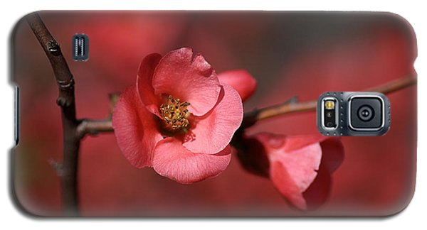 Spring Richness - Flowering Quince Galaxy S5 Case