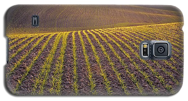 Spring Rows Galaxy S5 Case