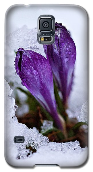 Galaxy S5 Case featuring the photograph Spring Snow by Joan Davis