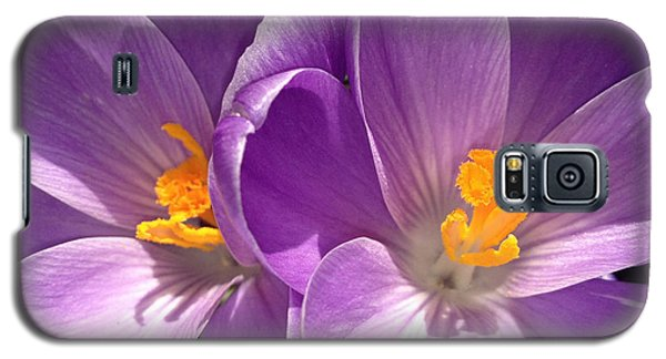 Galaxy S5 Case featuring the photograph Spring Sprang by Gwyn Newcombe