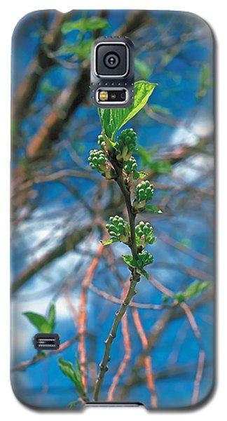 Spring Galaxy S5 Case by Terry Reynoldson