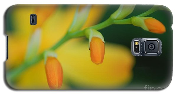 Spring Time Galaxy S5 Case by JRP Photography