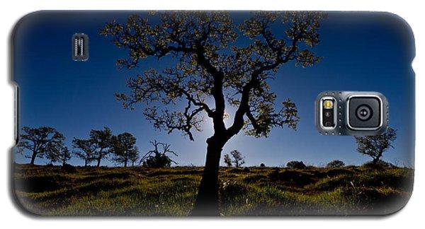 Spring Tree Galaxy S5 Case