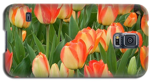 Spring Tulips Galaxy S5 Case by Betty-Anne McDonald