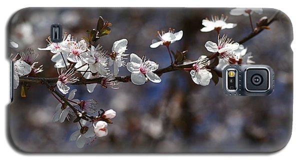Spring White Blossom Galaxy S5 Case