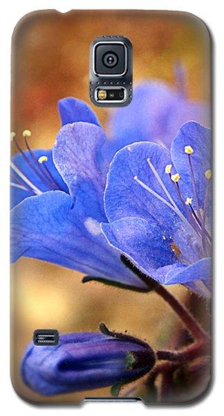 Spring Wildflowers - The Desert Bluebells Galaxy S5 Case