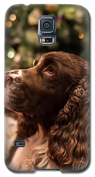 Springer Spaniel Galaxy S5 Case by Matt Malloy