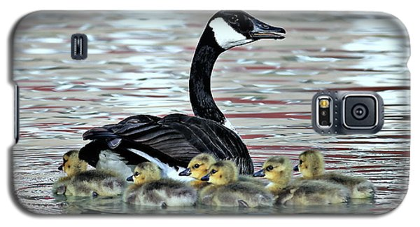 Spring's First Goslings Galaxy S5 Case