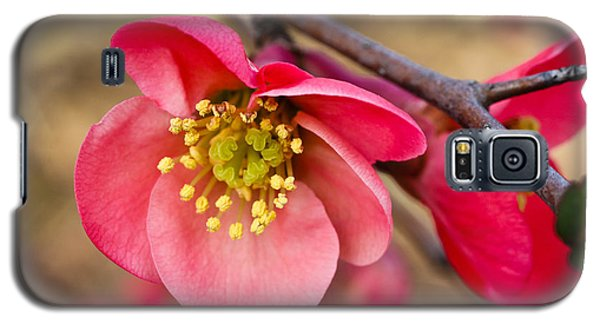 Galaxy S5 Case featuring the photograph Springtime Quince by Julie Andel