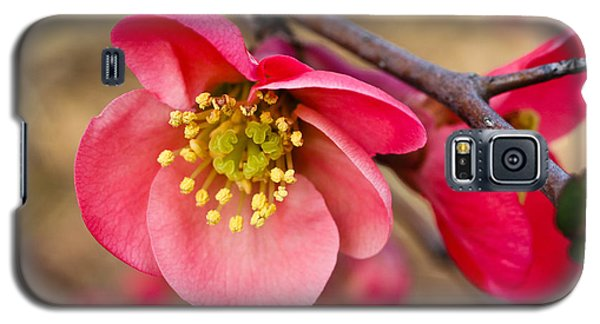 Springtime Quince Galaxy S5 Case by Julie Andel