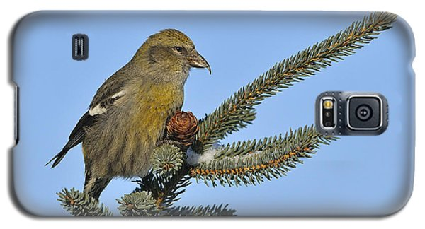 Spruce Cone Feeder Galaxy S5 Case by Tony Beck