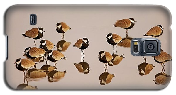 Spur-winged Lapwing (vanellus Spinosus) Galaxy S5 Case