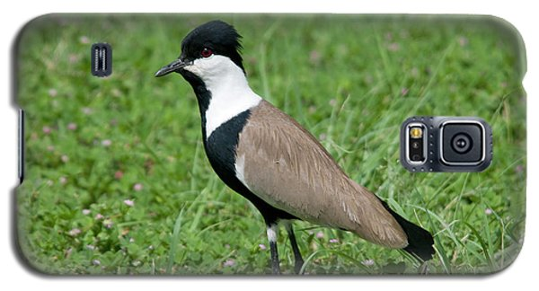 Spur-winged Plover Galaxy S5 Case