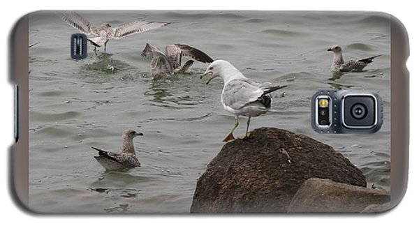 Squabbling Gulls-ii Galaxy S5 Case by Patricia Overmoyer