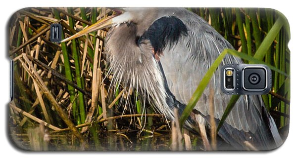 Squaking Blue Heron Galaxy S5 Case