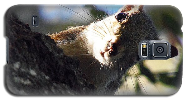Galaxy S5 Case featuring the photograph Squirrel 003 by Chris Mercer