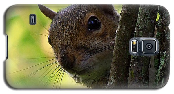 Galaxy S5 Case featuring the photograph Squirrel 025  by Chris Mercer