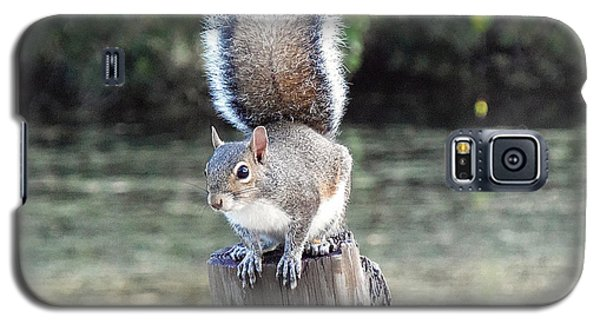 Galaxy S5 Case featuring the photograph Squirrel 035 by Chris Mercer
