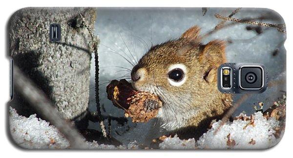 Squirrel 2 Galaxy S5 Case