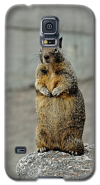 Squirrel At Lover's Point  Galaxy S5 Case
